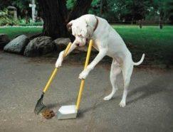 dog-training-techniques-plr-ebook