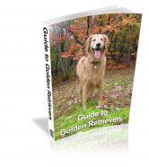 guide-to-golden-retrievers-plr-ebook-cover