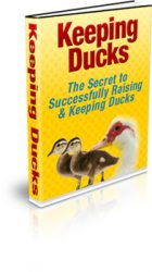 keeping-ducks-mrr-ebook-cover