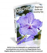 orchids-plr-ebook