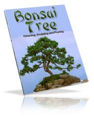 bonsai-tree-plr-ebook-cover  Bonsai Tree PLR Ebook bonsai tree plr ebook cover 190x238