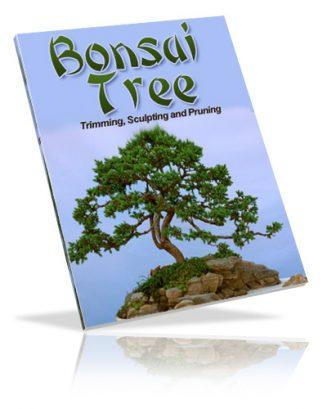Bonsai Tree PLR Ebook bonsai tree plr ebook cover 327x409