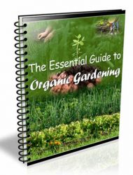 essential guide to organic gardening plr ebook essential guide to organic gardening plr ebook Essential Guide to Organic Gardening PLR Ebook essential guide to organic gardening plr ebook 190x250