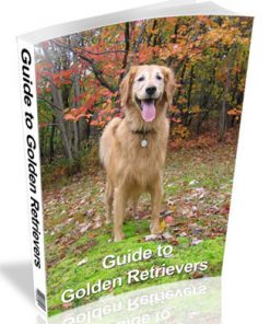 guide to golden retrievers plr ebook