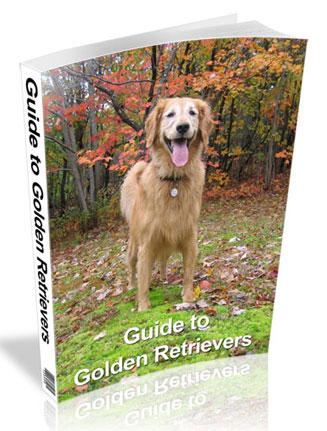 guide to golden retrievers plr ebook