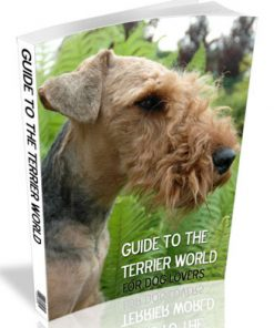guide to terrier dogs plr ebook