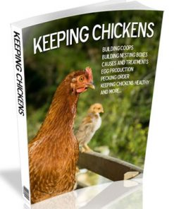 keeping chickens plr ebook