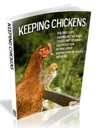 keeping chickens plr ebook