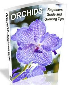 Orchids PLR Ebook