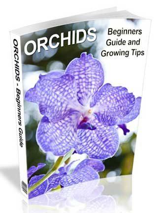 Orchids PLR Ebook